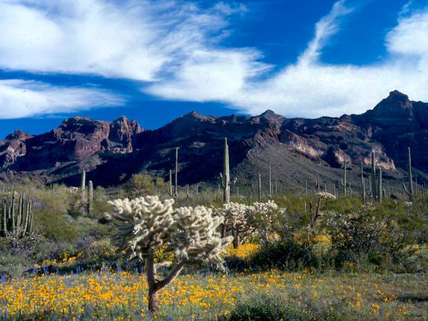 Arizona Scenic Calendar