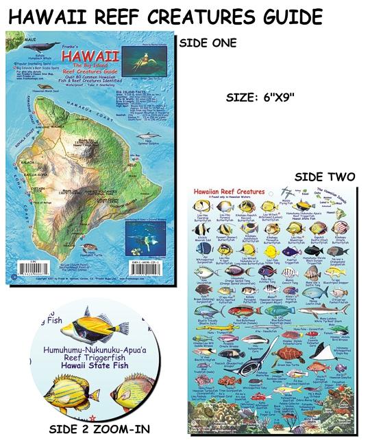 Hawai 39 i reef creatures guide fish card for Hawaiian fish identification