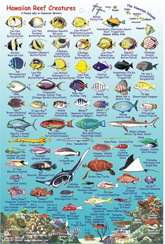 Amazon. Com: marine invertebrates florida, the bahamas.