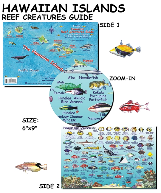 Hawaiian fish identification images for Hawaii fish guide