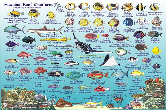 http://hawaiianresources.net/Hawaiian_Island_Fish_Card/HawaiianIslandsFishCard2007SideTwo.jpg