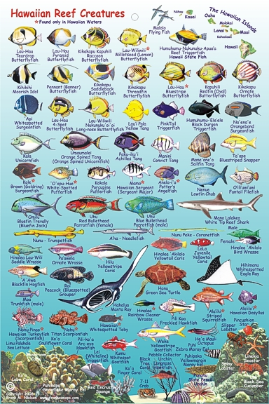 Hawaii Reef Fish guide with Hawaiian names #1 | Aloha Joe ...